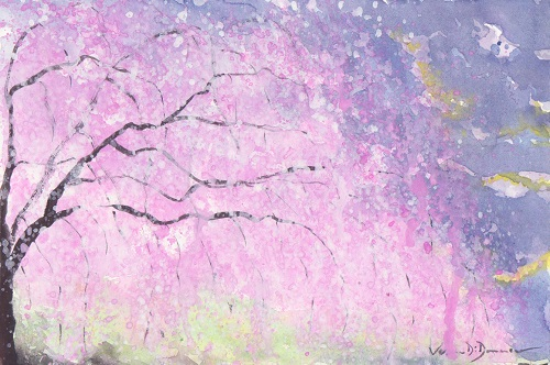 Flowering cherry_february 2018