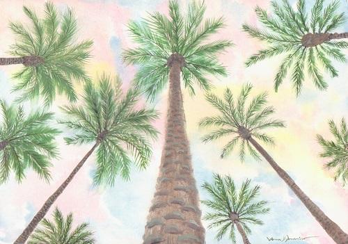 Palm sky_january 2018